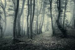 Trail through a mysterious dark forest in fog Stock Photos