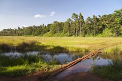 The famous Ondiri Swamp in Kikuyu near Nairobi in Kenya. The floating vegetat - stock photo