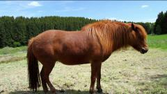 Horse on the German countryside in spring day. Stock Footage