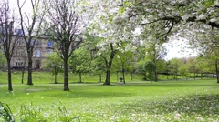 Kelvingrove Park In Spring With Blooming Trees In Glasgow, Scotland, Uk, Footage Stock Footage