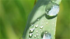Dewdrop on a Blade of Grass Close-up Green Stock Footage