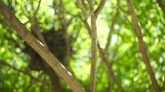 Tree branches with green leaves Stock Footage