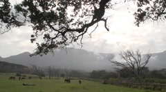 Wide shot of rural pasture with horses Stock Footage