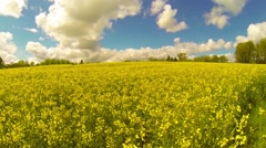 Spring fields of rapeseed against blue sky with clouds, footage - stock footage