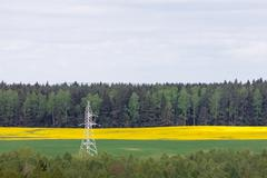 Electricity pylon in canola (rapeseed) field Stock Photos