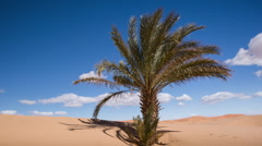 Stock Video Footage of erg chebbi dune sand sahara desert morocco palm tree merzouga