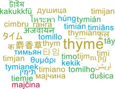 Thyme multilanguage wordcloud background concept - stock illustration