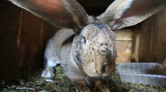 rabbits on the farm - stock footage