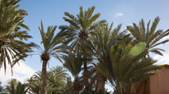 Tighmert oasis palm palmerie nature morocco landscape Stock Footage