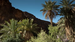 Ait Mansour oasis valley palm rock formations nature morocco landscape Stock Footage