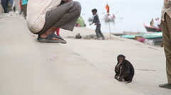 Small monkey at dock on Ganges river surrounded with Indian men. Stock Footage