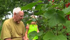 Old man teach granddaughter to harvest in the country. Slider. Stock Footage