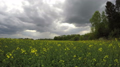 Dark spring rain clouds motion and rapeseed field, timelapse 4K Stock Footage