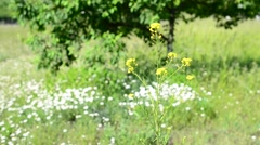 Beautiful fresh yellow flower on background of colorful meadow Stock Footage