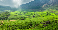 4k Timelapse of green tea plantations in Munnar, Kerala, India - stock footage