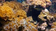 Coral in aquarium pan Stock Footage
