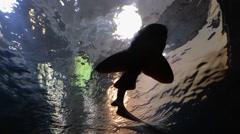 Shark in aquarium - stock footage