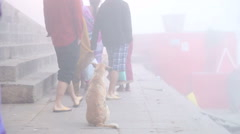 Dog sitting on ground while people are walking at dock of Ganges river. Stock Footage