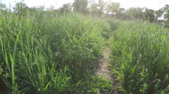 Footpath among tall grass Stock Footage