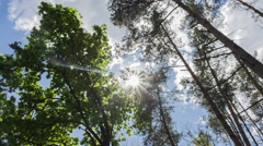 Sun Rays with lens flare in Forest On Summer Day Stock Footage