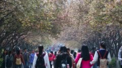 Chinese collage students walking in campus - stock footage