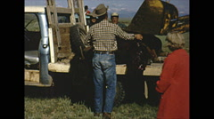 Vintage 16mm film, dying and dead buffalo on truck Stock Footage