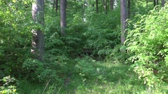 4k Zoom in hidden path in woodrush beech forest Stock Footage