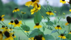 Slide Right Sunflower shot Stock Footage