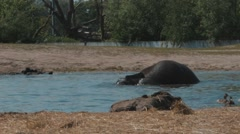 Baby elephant in a zoo playing in water. Stock Footage