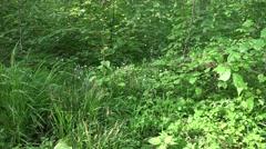 4k Fresh green grassy corner in woodrush beech forest background Stock Footage