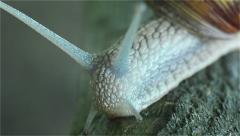 Snail Closeup Compilation - stock footage