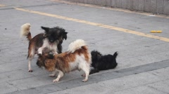 A group of lovely puppies, playing in the streets, in Shenzhen - stock footage