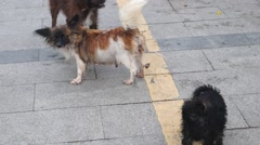 A group of lovely puppies, playing in the streets, in Shenzhen Stock Footage