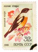 Stamp printed by Russia, shows bird, White-throated Bush Chat - stock photo