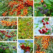 Berries ripe set Stock Photos