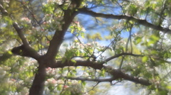 Adorable view of lyric nature in HD clip in fairy tale style for dreamlike mood - stock footage