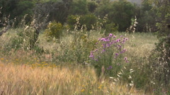 Flowers and Meadow, Spain - stock footage