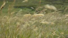 GRASS MOVE BY THE WIND Stock Footage