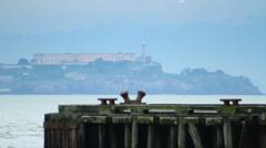 Alcatraz Island Stock Footage
