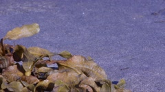 TIME-LAPSE, High tide and kelp on the  Scotland sand beach (UK) Stock Footage