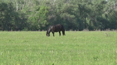 Horses in a meadow Stock Footage