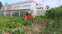 Farmer senior woman weed strawberry plant near garden greenhouse Stock Footage
