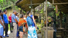 BORNEO, MALAYSIA - CIRCA JAN 2015: Professional tour guide explaining about t Stock Footage