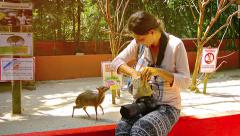 LANGKAWI, MALAYSIA - CIRCA FEB 2015: Javan mouse deer eating from a happy tou Stock Footage