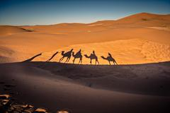 Long shadows of camel caravan in the desert - stock photo