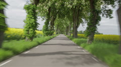 Driving a car through an avenue of trees and rapeseed Stock Footage