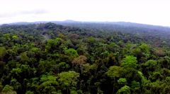 Rainforest with bird's-eye view. Equatorial Guinea Stock Footage