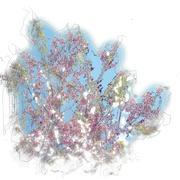 Flowering apricot tree Stock Illustration