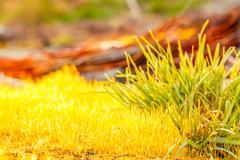 Detail yellow moss and green grass Stock Photos