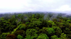 Jungles of Africa. The camera flying over the rainforest Stock Footage